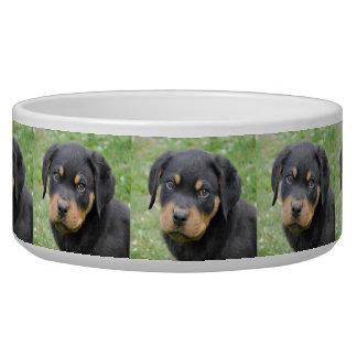 Doggy McDogface Rottweiler Puppy