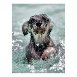 Doggy Paddle Postcard