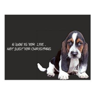 doggy postcard