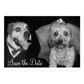 Doggy Save the Date Postcard