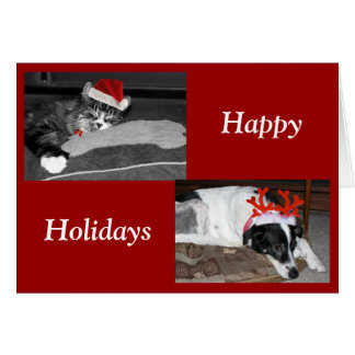 dogs and cats card