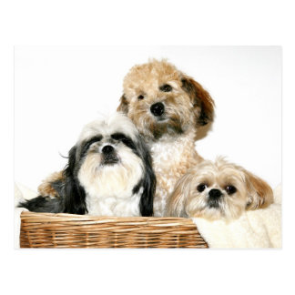 Dogs in laundry basket postcard