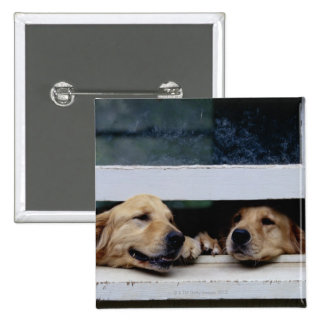Dogs Looking Out a Window 2 Inch Square Button