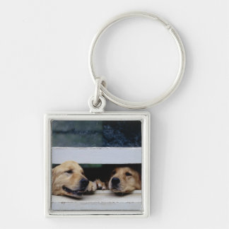 Dogs Looking Out a Window Keychain