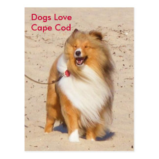 Dogs Love Cape Cod Postcard