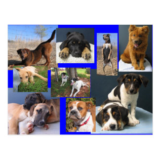 Dogs of the OKC Animal Shelter Postcard