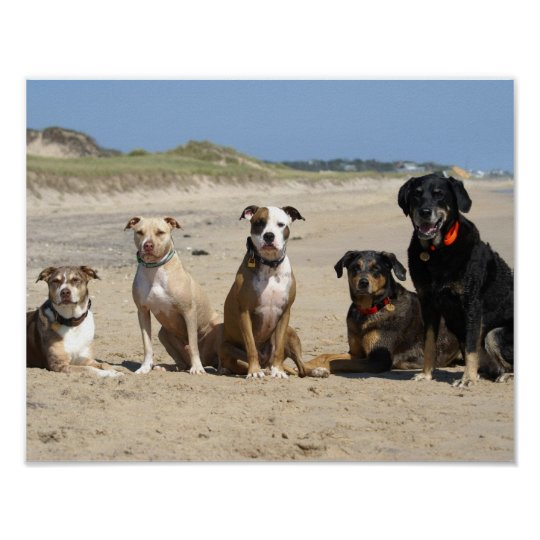 dogs on the beach poster