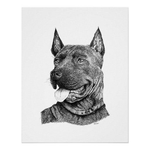 Dog's pen and ink drawing in black and white print