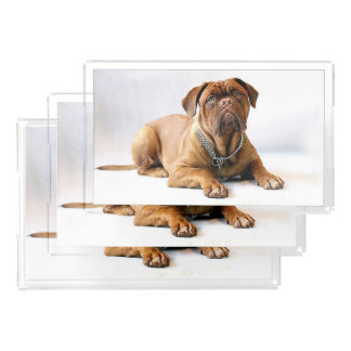 Dogue de bordeaux acrylic tray