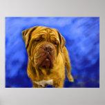 Dogue de Bordeaux Fine Art Prints