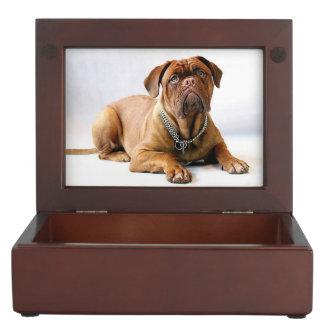 Dogue de bordeaux keepsake box