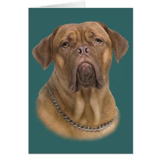 Dogue De Bordeaux Portait Card