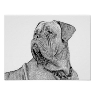 Dogue de Bordeaux poster