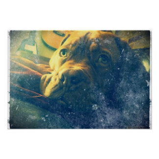 Dogue de Bordeaux vintage inspired poster