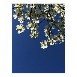 Dogwood Blossom Cards