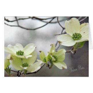 Dogwood branch--add your own words card