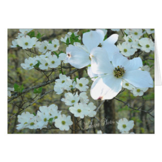Dogwood branch-add your words for any occasion card