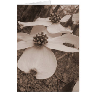 Dogwood Duo Card