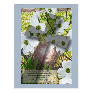 Dogwood Flower and Cross w/John 3:16 Postcard