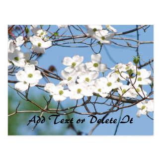 Dogwood Flower postcard