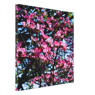 Dogwood flowering pink spring tree canvas print
