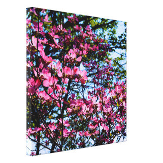 Dogwood flowering pink spring tree canvas print