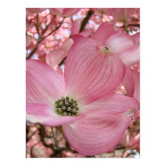 DOGWOOD FLOWERS Pink 1 Cards Art Gifts Mugs Postcard