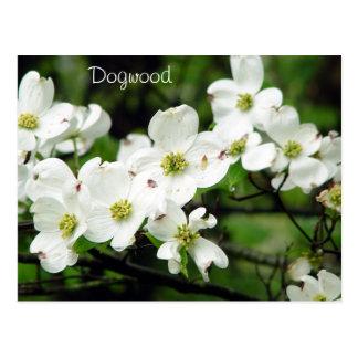 Dogwood Postcard