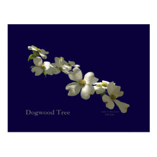 Dogwood Tree Blooms Postcard