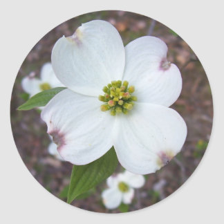 Dogwood Tree Classic Round Sticker