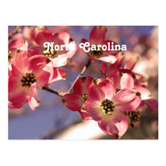 Dogwood Tree Postcard