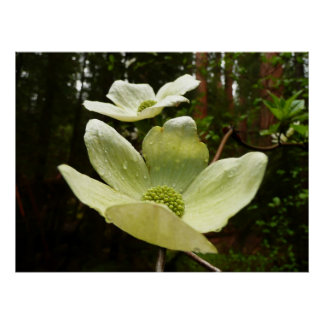 Dogwoods and Redwoods at Yosemite National Park Poster