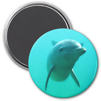 Dolphin 3 Inch Round Magnet
