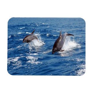 Dolphin Adventure Magnet