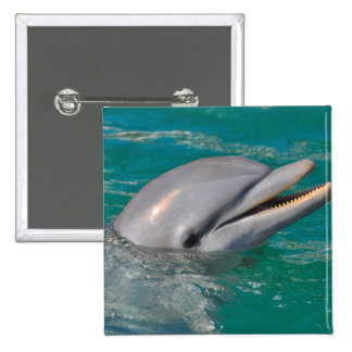 Dolphin Close Up 2 Inch Square Button
