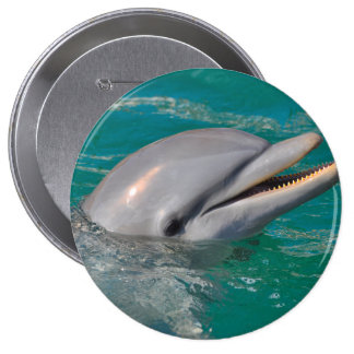 Dolphin Close Up 4 Inch Round Button