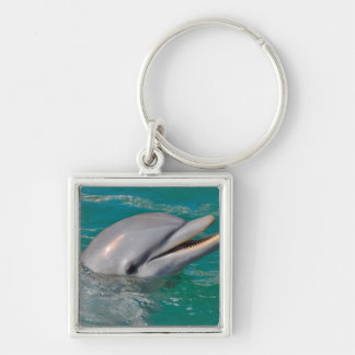 Dolphin Close Up Keychain