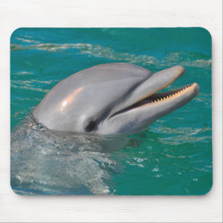 Dolphin Close Up Mouse Pad