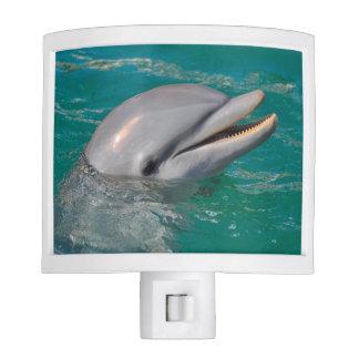 Dolphin Close Up Nite Lites