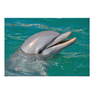 Dolphin Close Up Photo Print