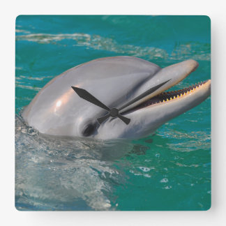 Dolphin Close Up Square Wall Clock