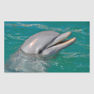 Dolphin Close Up Sticker