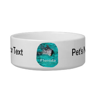 dolphin coming out of teal clear water florida cat bowl