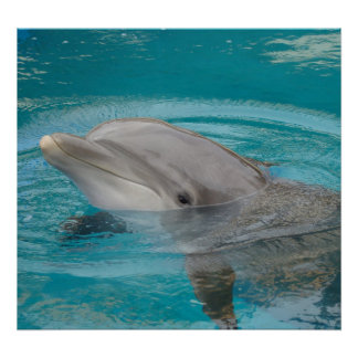 Dolphin Friend Poster