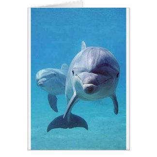 dolphin II Card