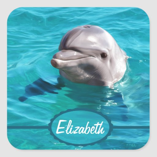Dolphin in Blue Water Photo Sticker