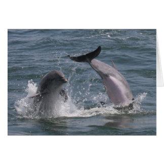 Dolphin Jump! Card