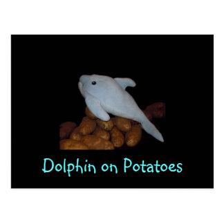 Dolphin on Potatoes Postcard