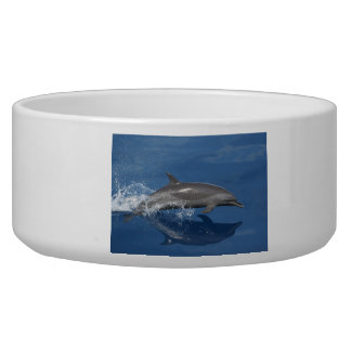 Dolphin Photo Dog Food Bowl