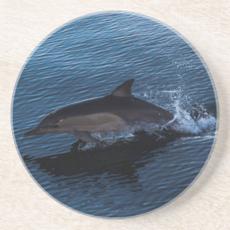 Dolphin Playing off Surfers Paradise Beverage Coaster